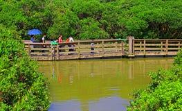 Sich hin- und herbewegende Promenade am Sumpfgebietpark in Hong Kong Lizenzfreie Stockfotografie