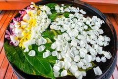 Sich hin- und herbewegende sortierte Blumen in einem großen Wasser rütteln stockbild