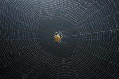 Sich hin- und herbewegende Spinne Lizenzfreie Stockbilder