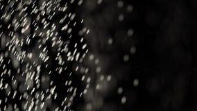 Sich hin- und herbewegende verschiedene sortierte Flecke des Staubfliegens auf schwarzem Hintergrund stock video footage