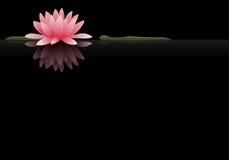 Sich hin- und herbewegende Wasser-Lilie Lizenzfreies Stockfoto