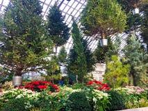 Sich hin- und herbewegende Weihnachtsbäume in Garfield Park Conservatory lizenzfreie stockbilder