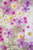 Sich hin- und herbewegende wilflowers Lizenzfreie Stockbilder