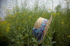 Sich hin- und herbewegender Hut auf dem Rapsblumengebiet Lizenzfreies Stockfoto