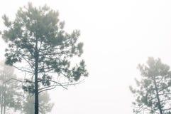 Sich hin- und herbewegender Nebel lizenzfreie stockbilder
