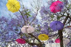 Sich hin- und herbewegender Regenschirmbaum Stockfotos