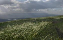 Sich hin- und herbewegendes Gras Stockbild