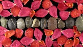 Sich hin- und herbewegendes rosafarbenes Blumenblatt und eine Linie von Steinen im Wasser im Wind stock video