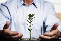 Sicheres Wachstum des Finanzreichtums. Stockfoto