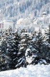 Sicherheit in Davos Stockfotografie