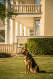 Sicherheits-Hund Stockfoto