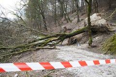 Sicherheitsband auf schädigendem Waldweg Lizenzfreie Stockbilder