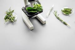 Sicherheitslebensmittel Labor für Lebensmittelanalyse Kräuter, Grüns unter Mikroskop auf grauem Draufsicht-Kopienraum des Hinterg lizenzfreies stockbild