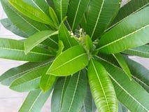 Sichtbar von der Spitze des natürlichen grünen Blattes lizenzfreie stockbilder