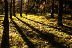 Sichtbarmachung des Lichtes u. der Schatten Stockbild