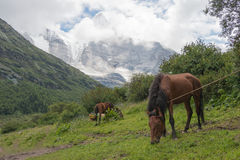 SICHUAN, CHINA - JUL 24 2014: Yading Nature Reserve. a famous la. Ndscape in Daocheng, Sichuan, China stock photos
