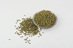 Sichuan Green Pepper stock photography