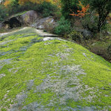 Sichuan haze head moss rocks Royalty Free Stock Photography