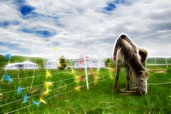 Sichuan horse on the prairie Royalty Free Stock Photography