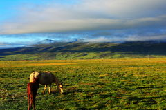 Sichuan Litang grassland scenery Stock Photos