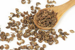 Sichuan pepper close up Stock Image