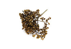 Sichuan pepper Royalty Free Stock Image