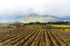Sicilia, Italy, landscape, wine trees royalty free stock photo
