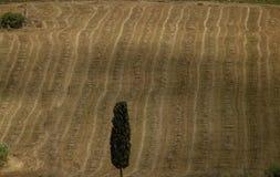 Siciliaans landschap van een tarwegebied stock afbeeldingen