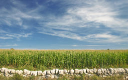 Siciliaans platteland Stock Fotografie
