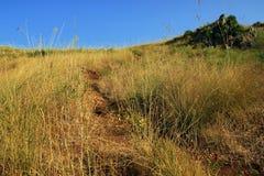 Siciliaans wild land stock afbeeldingen