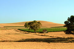 Sicilian Agricultural Landscape. Picturesque Agricultural Summer Landscape Picture in Sicily. It was taken on a warm afternoon with clear blue sky in the fields Stock Images