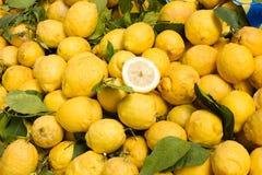 Sicilian citron Stock Photography