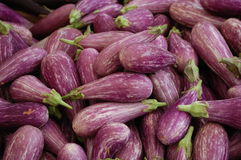 Sicilian Eggplant Stock Image