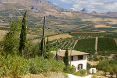 Sicilian farm house and cypress tre. Traditional Sicilian farmhouse with mountain view royalty free stock images