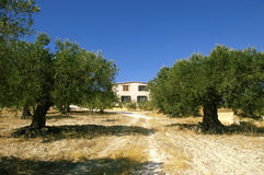 Sicilian farm3. Traditional Sicilian farm house surrounded with olive trees stock photo