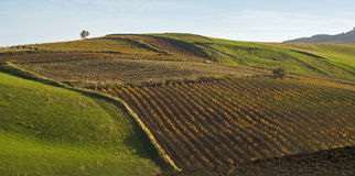 Sicilian hill. Valley cultivated in Sicily (italia stock photography