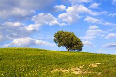 The sicilian landscape. An isolated tree in the country stock images