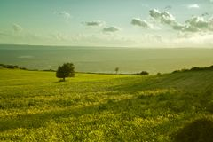 The sicilian landscape. An isolated tree in the country royalty free stock photo