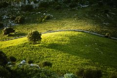 Sicilian Landscape. An hill in the sunset. Isolated tree Royalty Free Stock Image