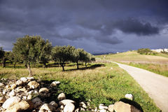 Sicilian landscape with olive trees Stock Photo