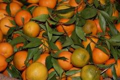 Sicilian mandarin. Fresh mandarin with green leaf royalty free stock image