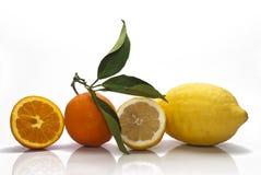 Sicilian Oranges and Lemons. On white background Royalty Free Stock Photos