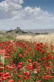 Sicilian poppy seeds. In the middle of sicilian interior Royalty Free Stock Photo