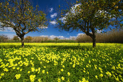 Sicilian spring. Typical spring rural landscape in the sicilian hinterland. Sicily, Syracuse, Italy Royalty Free Stock Photo