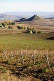 Sicilian vineyard winter landscape Royalty Free Stock Photo