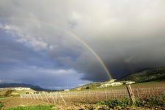 Sicilian winter vineyard landscape Stock Photography