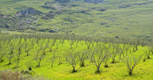 Sicily countryside Stock Photography