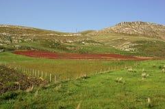 Sicily countryside. Sicilian countryside landscape near palermo royalty free stock photos
