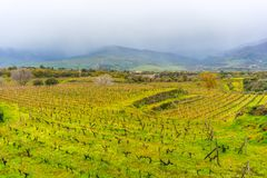 Sicily, Italy, landscape, wine trees royalty free stock photography