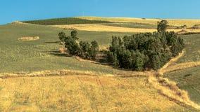 Sicily Summer Landscape Stock Photo